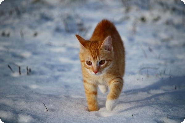 cat-1147266_640